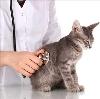 Ветеринарные клиники в Михайловском
